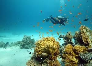Кораллы в  Шарм-эль-Шейхе