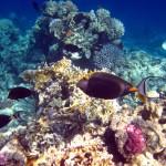 В Египте прошла акция по очистке дна Красного моря