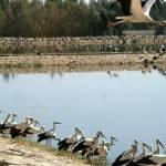 В Египте сфотографировали окольцованного в Беларуси аиста